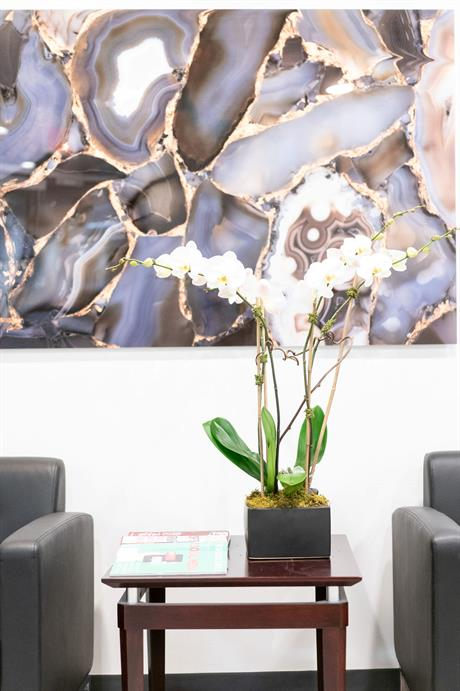 A waiting room setting, featuring a plant on a coffee table in between two armchairs.